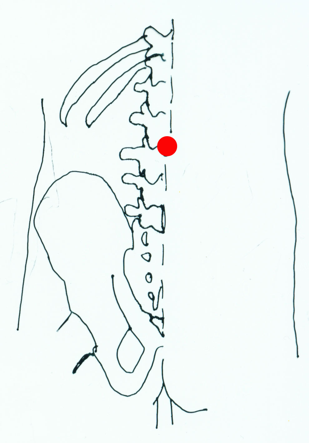 ming men - acupuncture point picture